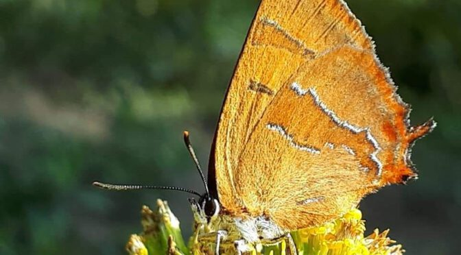Klein und groß mit Schwänzchen an den Flügeln