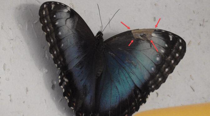 Tierarzt für Schmetterling?
